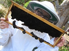 examplecomb June Bee Hive Inspection