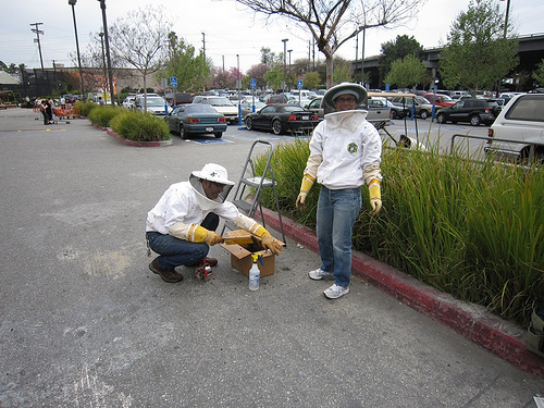 freebeesfromhomedepot Home Depot Swarm Capture & Bee Rescue Helped By Neighbors